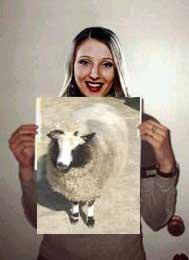 sheep wanted sign